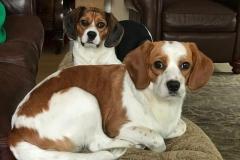 Gilbert & Gibby (Buttercup & Vincent) DOB August 2017