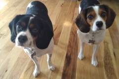 Watson & Wilfred (Rosie & Vincent) DOB June 2015 & February 2016