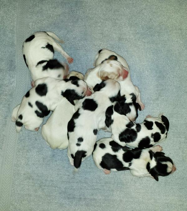 Jolenes pups1
