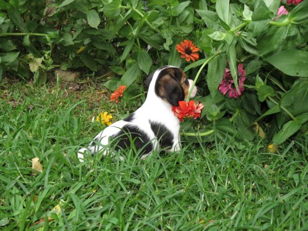 Elsie (3)
