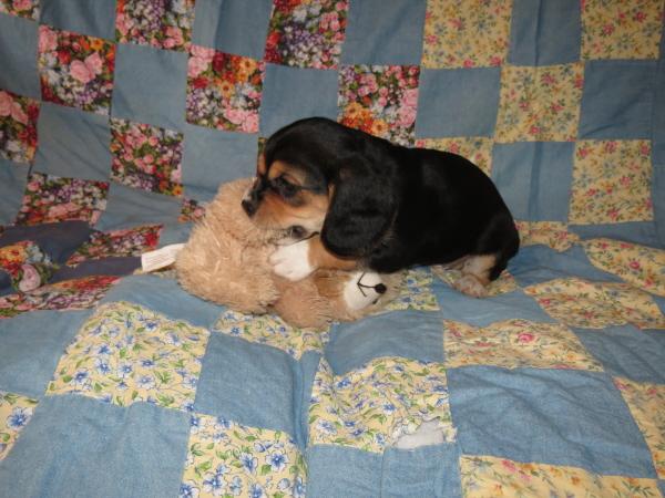 Murphy (3)