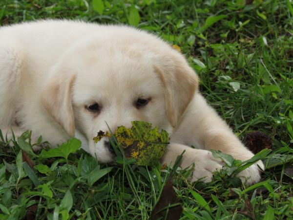 Florance (5)