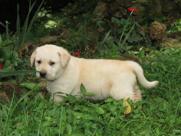 Fredrick (5)