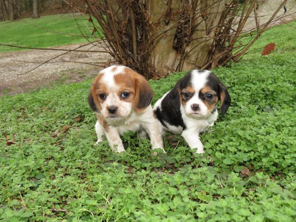 Olivia and Opal1