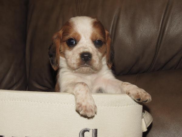 Ollie1