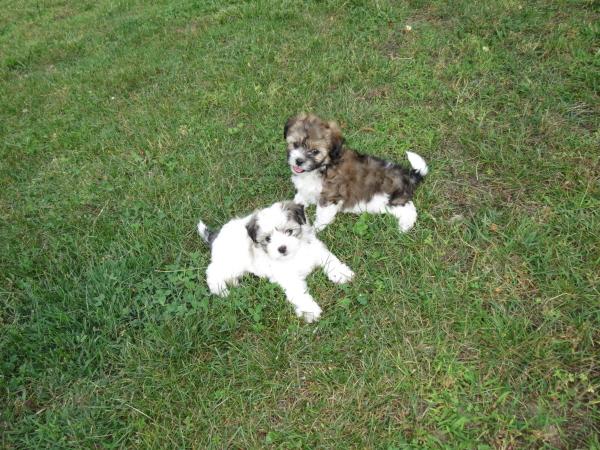 Vivian & Violet (1)