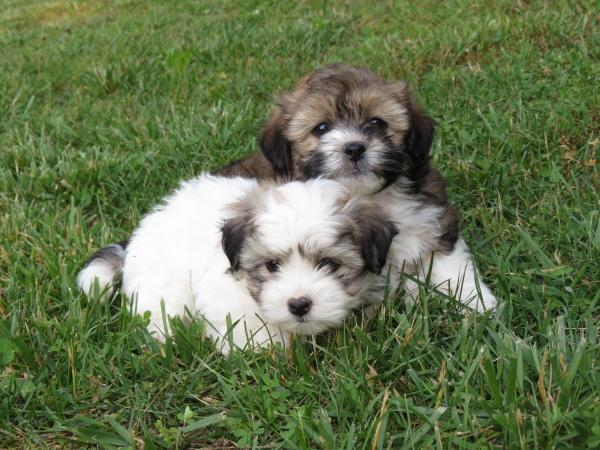 Vivian & Violet (2)