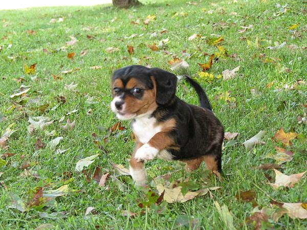 Callie (3)