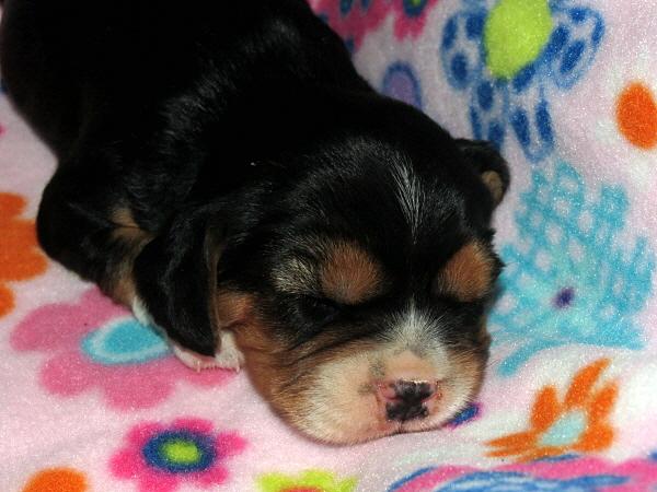 Callie (4)