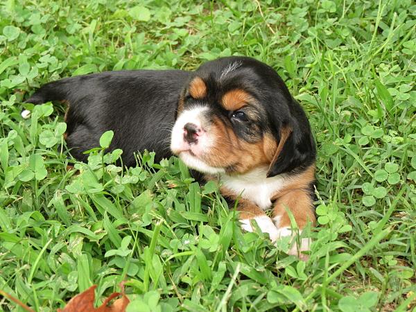 Callie (6)