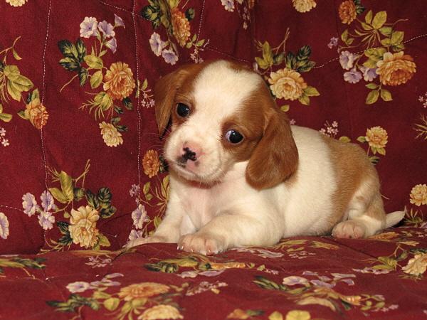 Daisy (3)