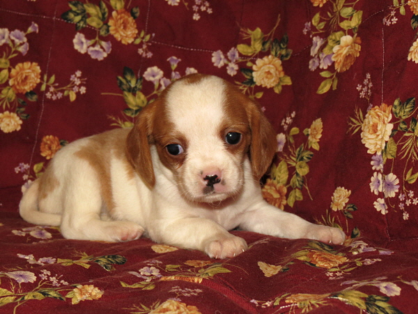 Daisy (4)