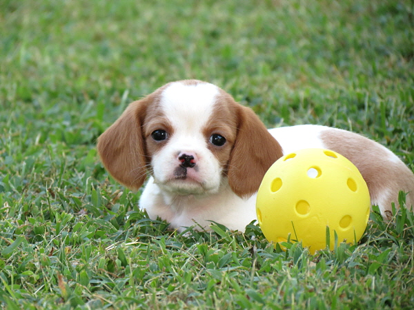 Daisy (6)
