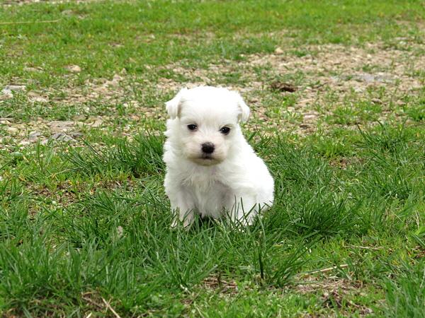 Elsie's Puppies – 4 Weeks Old