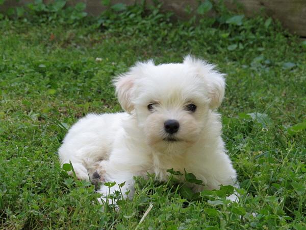 Elsie's Puppies – 7 Weeks Old