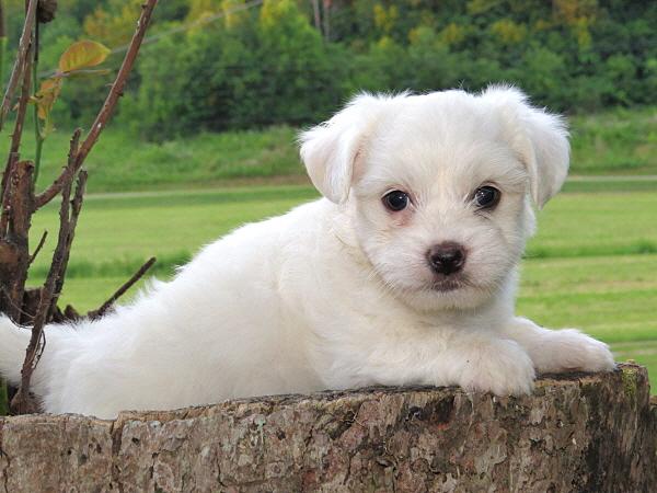 Merida's Puppies – 6 Weeks Old