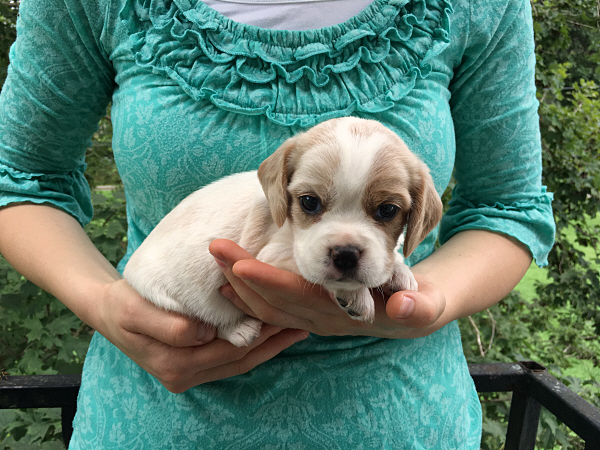 Pepper's Puppies – 4 Weeks Old