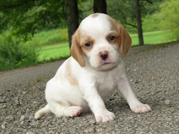 Jolene's Puppies – 4 Weeks Old