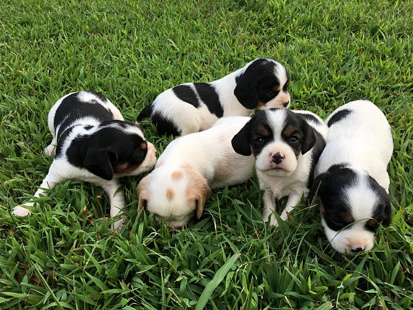 Jolene's Puppies – 3 Weeks Old