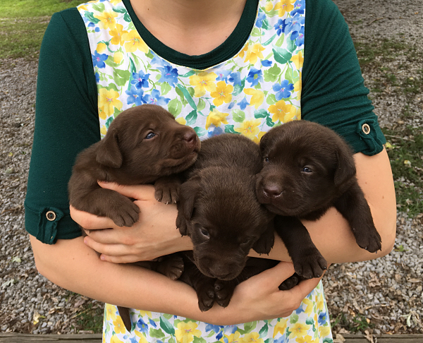 Rag Muffin's Puppies – 3 Weeks Old
