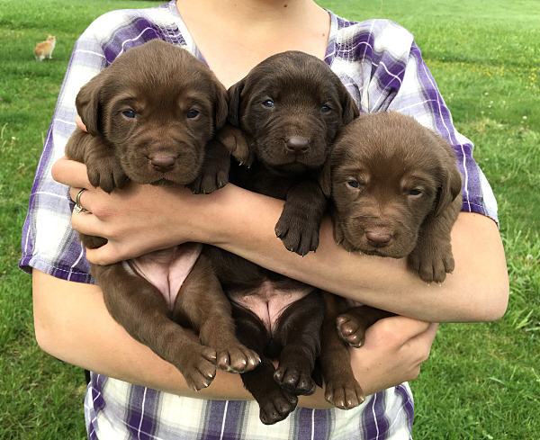Ruger's Puppies – 3 Weeks Old