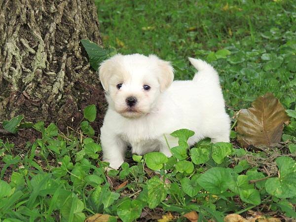 Elsie's Puppies – 5 Weeks Old