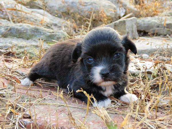Merida's Puppies – 3 Weeks Old