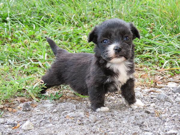 Merida's Puppies – 4 Weeks Old