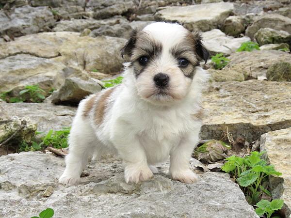 Virgie's Puppies – 4 Weeks Old
