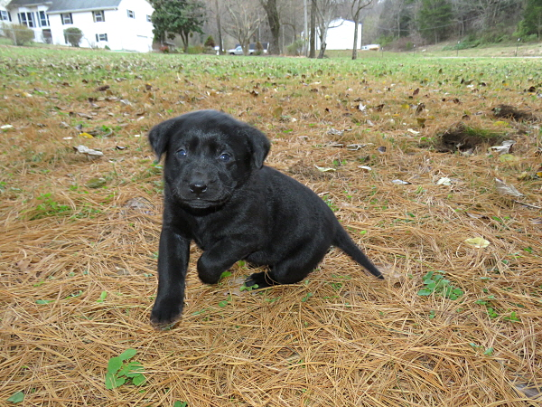 Dakota's Puppies – 5 Weeks Old