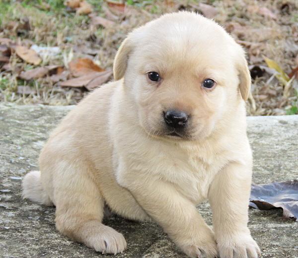 Dakota's Puppies – 4 Weeks Old