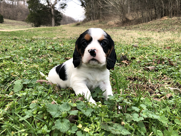 Bessy's Puppies – 5 Weeks Old