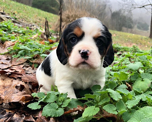 Bessy's Puppies – 4 Weeks Old