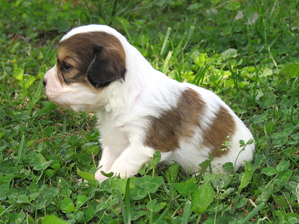 Yalili's Puppies – 3 Weeks Old
