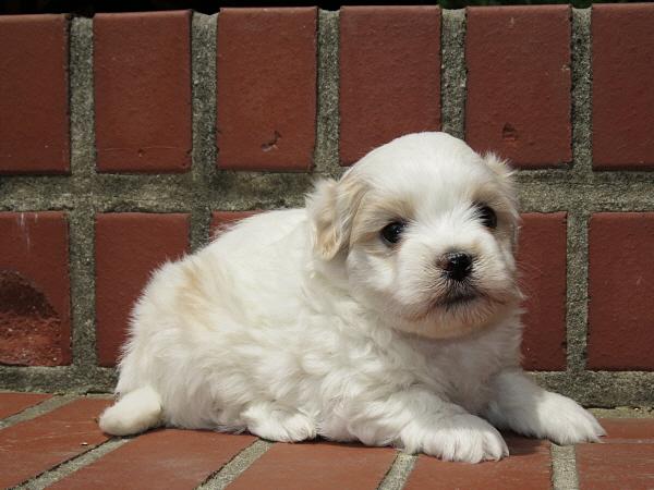 Virgie's Puppies – 5 Weeks Old