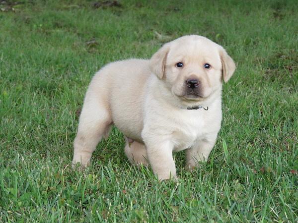 Cricket's Puppies – 4 Weeks Old