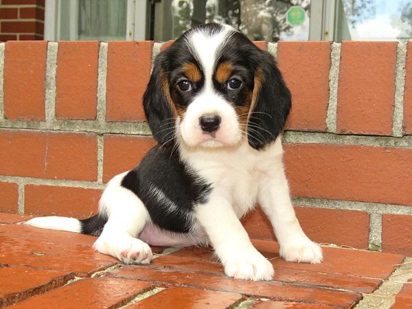 Rosie's Puppies – 5 Weeks Old